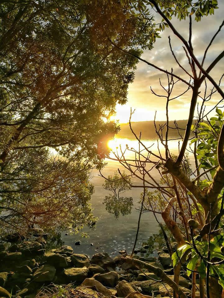 Aroha Island - sunrise